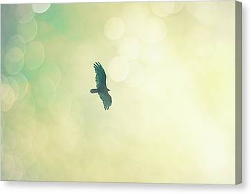 Canvas Print featuring the photograph Soar by Melanie Alexandra Price