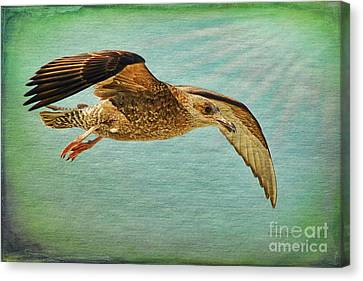Soar With Me Canvas Print by Deborah Benoit