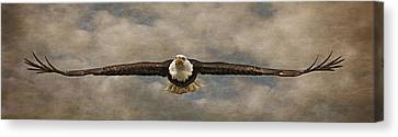 Bif Canvas Print - Soaring by Wes and Dotty Weber