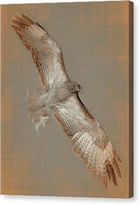 Soaring Hawk  Canvas Print by Chris LeBoutillier