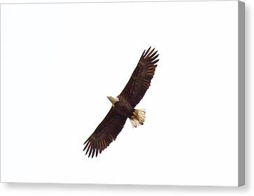 Canvas Print featuring the photograph Soaring High 0885 by Michael Peychich