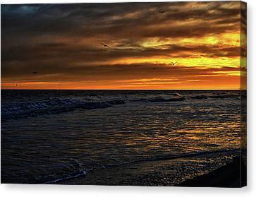 Canvas Print featuring the photograph Soaring In The Sunset by Kelly Reber