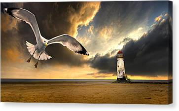 Flying Seagull Canvas Print - Soaring Inshore by Meirion Matthias