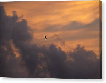 Canvas Print featuring the photograph Soaring Into The Sunset by Richard Bryce and Family
