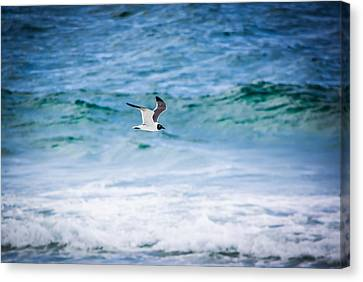 Soaring Over The Ocean Canvas Print by Shelby Young