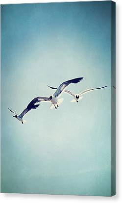 Canvas Print featuring the photograph Soaring Seagulls by Trish Mistric