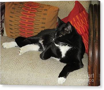 Socks The Cat King Canvas Print by Fred Jinkins