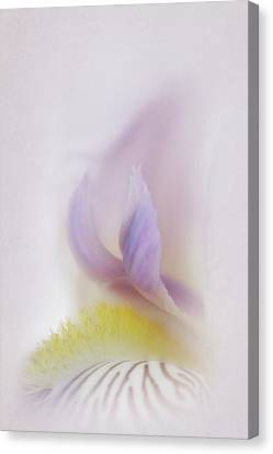 Canvas Print featuring the photograph Soft And Delicate Iris by David and Carol Kelly
