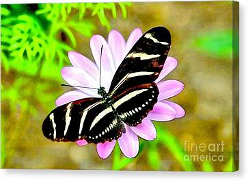 Soft And Wet Bwr Butterfly  Canvas Print by Catherine Lott