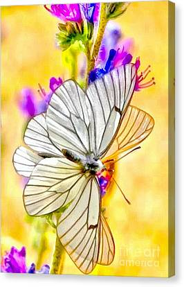Soft And Wet Moth Canvas Print by Catherine Lott