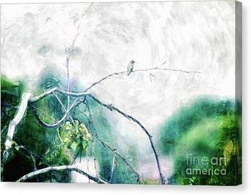 Soft Bird Canvas Print by Davy Cheng