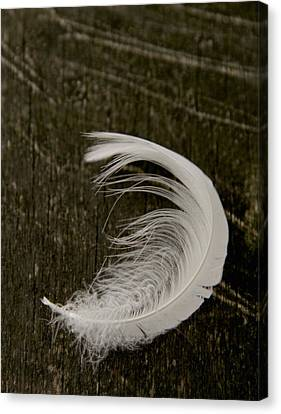 Soft Curve Two Canvas Print by Odd Jeppesen