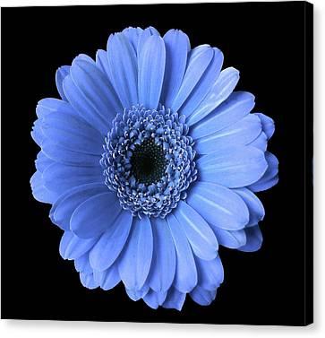 Soft Flower Joy Canvas Print