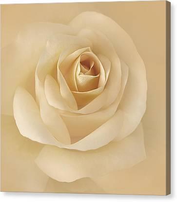 Soft Golden Rose Flower Canvas Print by Jennie Marie Schell