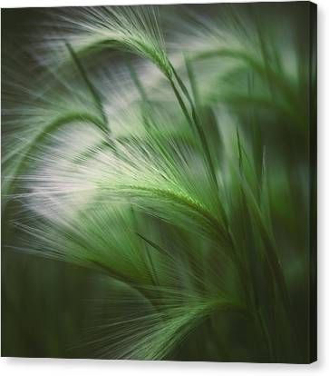 Blades Canvas Print - Soft Grass by Scott Norris