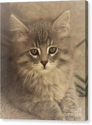 Soft Kitty Canvas Print