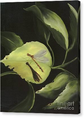 Soft Landing Canvas Print by Carol Sweetwood