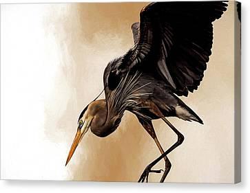 Soft Landing Canvas Print by Cyndy Doty