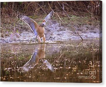 Soft Landing On The Pond Canvas Print by Carol Groenen