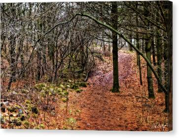 Soft Light In The Woods Canvas Print