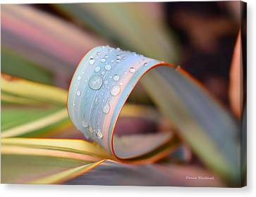 Soft Like Morning Dew Canvas Print by Donna Blackhall