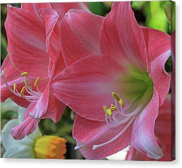 Canvas Print featuring the photograph Soft Lilies by Robert Pilkington