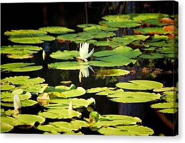 Canvas Print featuring the photograph Soft Morning Light by Jan Amiss Photography