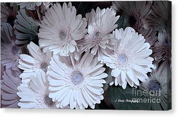 Soft Pink Daisy Bouquet Canvas Print by Jeannie Rhode