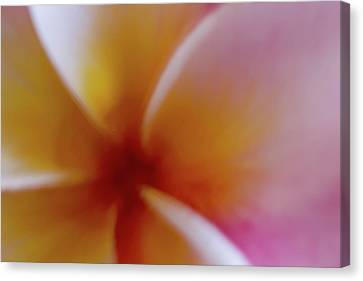 Canvas Print featuring the photograph Soft Plumeria by Roger Mullenhour