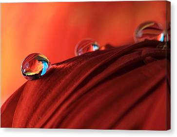 Soft Red Petals With Water Drops Canvas Print