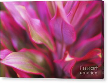 Soft Red Ti Canvas Print by Ron Dahlquist - Printscapes