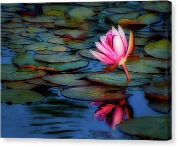 Soft Reflection Canvas Print