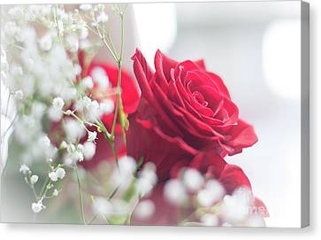 Soft, Romantic, Red Rose Canvas Print by Cheryl Baxter