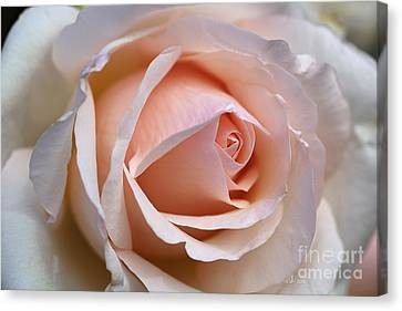 Soft Rose Canvas Print