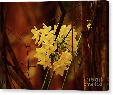 Canvas Print - Soft Tangled Beauty  by Kim Pate