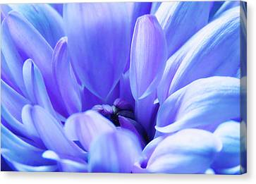 Soft Touch 2 Canvas Print