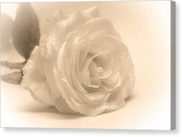 Canvas Print featuring the photograph Soft White Rose by Scott Carruthers
