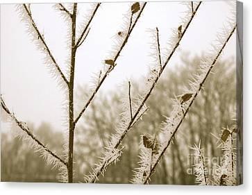Soft Winter Sepia Branches Canvas Print