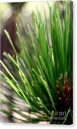 Log Cabin Art Canvas Print - Softer Side Of Pine by The Forests Edge Photography - Diane Sandoval