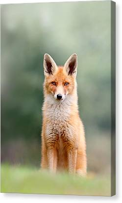 Softfox - Red Fox Sitting Canvas Print by Roeselien Raimond
