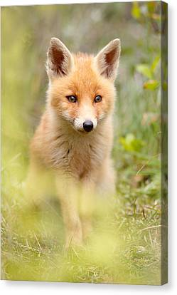 Softfox Canvas Print by Roeselien Raimond