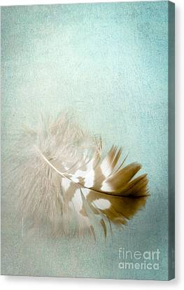 Softly Canvas Print by Jan Bickerton
