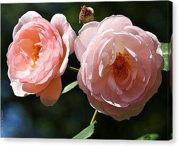 Canvas Print featuring the photograph Softly Pink by Al Fritz