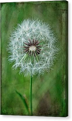 Canvas Print featuring the photograph Softly Sitting by Jan Amiss Photography