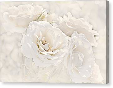 Softness Of Ivory Roses Canvas Print