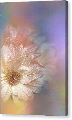 Drop Canvas Print - Softness Receding by Terry Davis