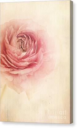 Close Up Floral Canvas Print - Sogno Romantico by Priska Wettstein