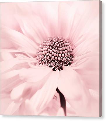 Canvas Print featuring the photograph Soiree In Cotton Candy Pink by Darlene Kwiatkowski