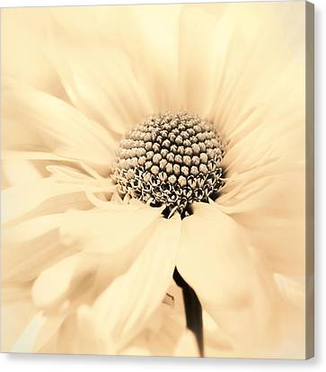 Canvas Print featuring the photograph Soiree In Creamy Yellow by Darlene Kwiatkowski