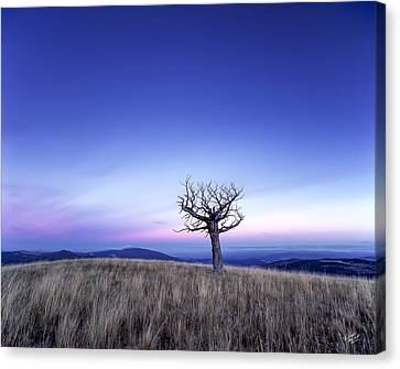 Solace And Grace Canvas Print by Leland D Howard